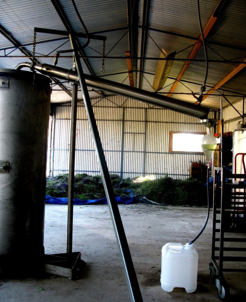 The still in operation – control of the still is manual and demands skill and vigilance.  It is necessary to distil in an open but protected shed.  The white cube is for tapping off the hydrosol.