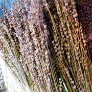Dry Lavandin Florets – L. x intermedia spp. 100g IMG 4