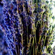 Dry Lavender Florets – L. angustifolia spp IMG 4