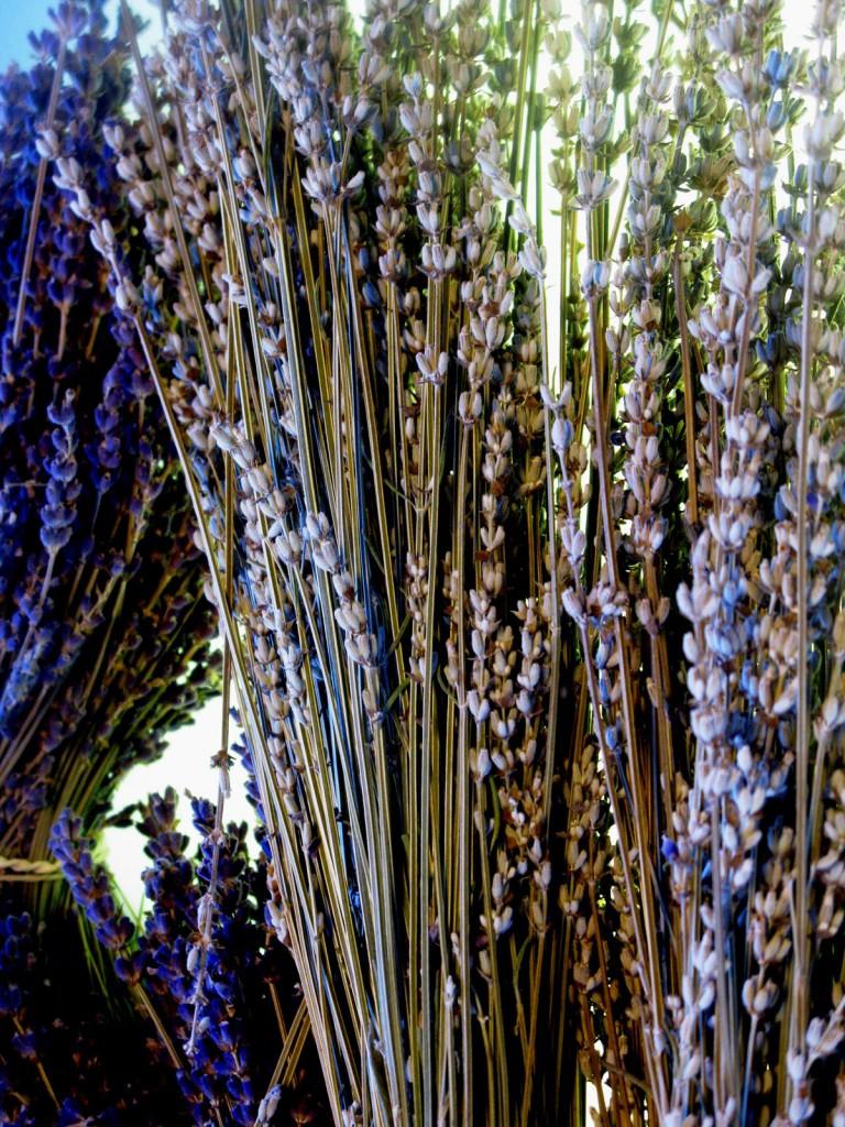 Dry bouquet ; Lavandula x intermedia 'Alba'.