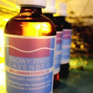 LAVANDIN ESSENTIAL OIL - L. X INTERMEDIA SUMIAN IMG1