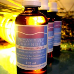Lavandin Essential Oil - L. x intermedia Abriallis  1