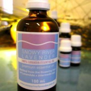 Lavandin Essential Oil – L. x intermedia Margaret IMG 3