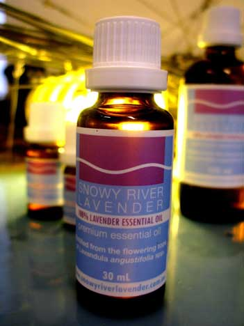 Lavender Essential Oil – L. angustifolia Maillette 1