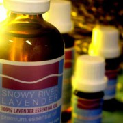 Lavender Essential Oil – L. angustifolia Maillette 3