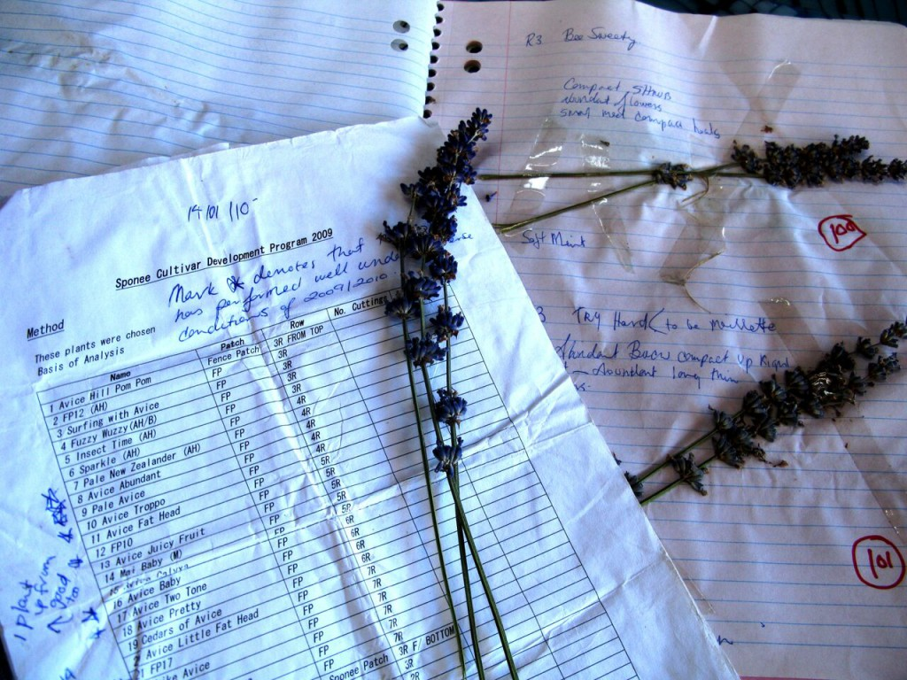 Records are important when starting a development program. All plants taken into the cultivar development program in 2009 have a botanical dried specimen, location of original plant in a patch and row, also recorded are some general notes on our perception of it in terms of size, aroma, colour, suspected parentage, name and or number. Also recorded are any follow up propagation and planting out of the chosen plant in larger numbers.
